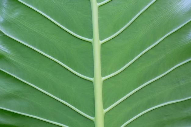 背景の葉の模様とデザイン。 無料写真
