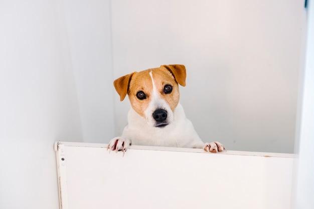 Молодая собака Бесплатные Фотографии