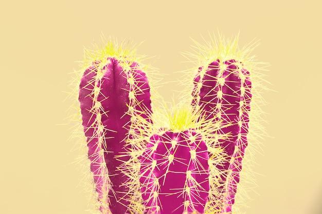 Модный тропический неон кактус на желтом Бесплатные Фотографии