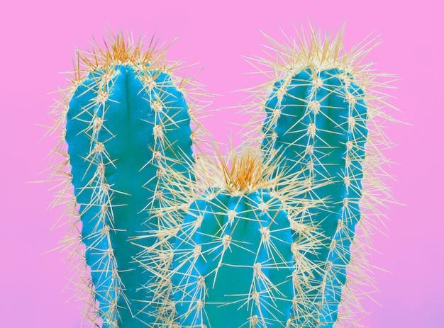 ピンクのトレンディな熱帯ネオンサボテンの植物 無料写真