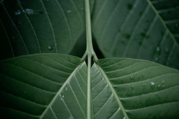Дождевая вода на макросе зеленого листа. Бесплатные Фотографии