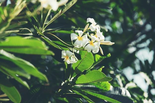 抽象的な自然の緑の葉 無料写真