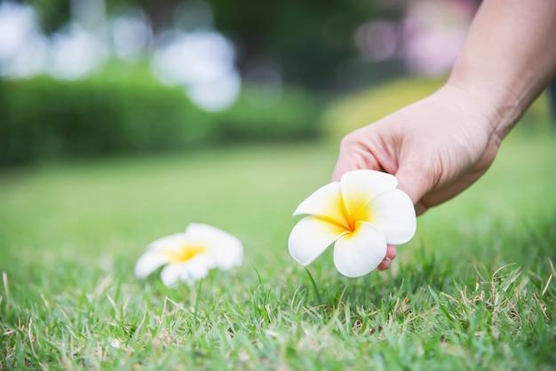 女性の手が緑の芝生地面 - 美しい自然の概念を持つ人々からプルメリアの花を選ぶ 無料写真