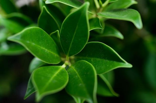 濃い緑の葉 無料写真