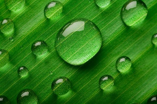 バナナの葉に多くの水滴が落ちる 無料写真