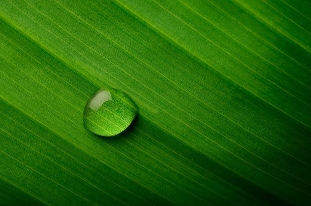 バナナの葉に落ちる水滴 無料写真