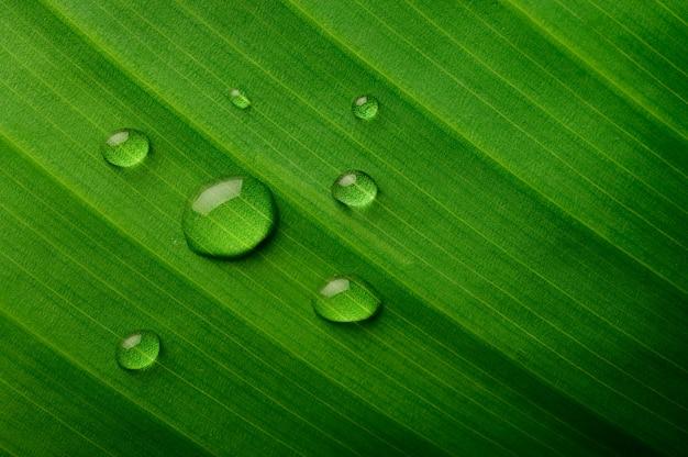 Многие капли воды падают на банановые листья Бесплатные Фотографии