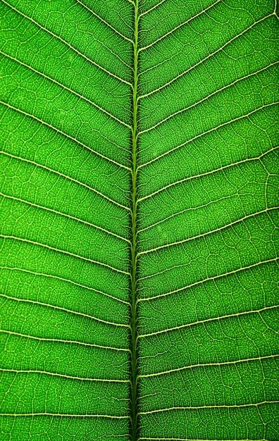 Закройте зеленую линию листьев Бесплатные Фотографии