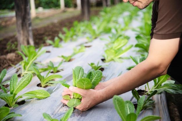 Человек фермы работает в своем саду органических салата Бесплатные Фотографии