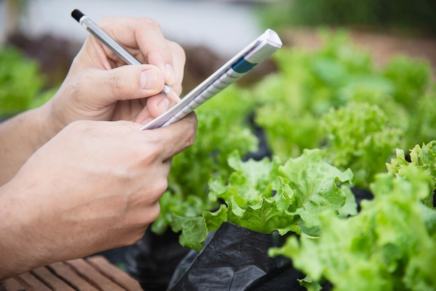 彼の有機レタスの庭で働く農場の人 無料写真