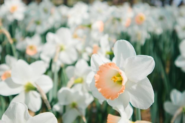 Белый цветочный сад Бесплатные Фотографии