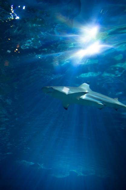タンク内のサメ 無料写真