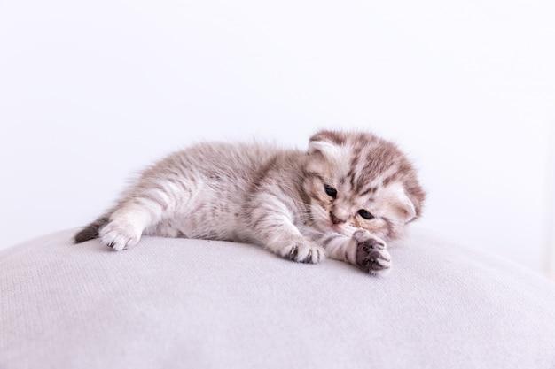 枕の上のキティ猫。 無料写真