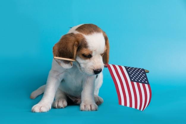 Милый умный щенок бигля с американским флагом во рту Бесплатные Фотографии