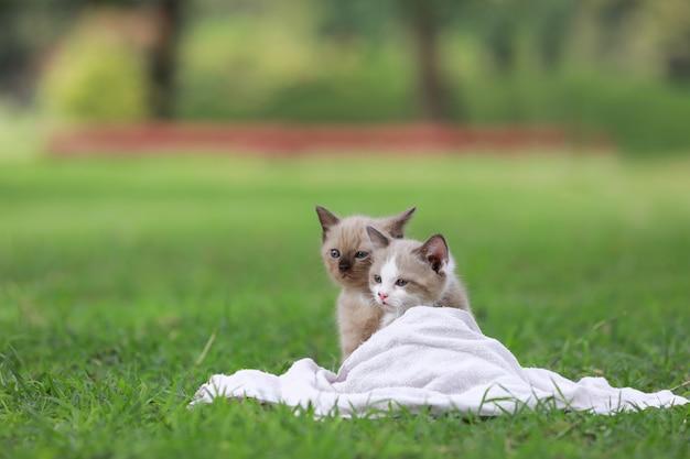 公園の緑の草の上に座っている愛らしい子猫。 無料写真