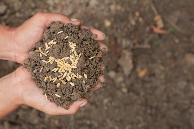 世界食糧デーでは、男の手が土を包み込み、水田の種が上にあります。 無料写真