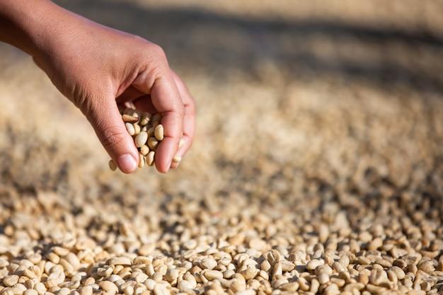 Руки с кофейными зернами на кофейных зернах, которые сушат Бесплатные Фотографии