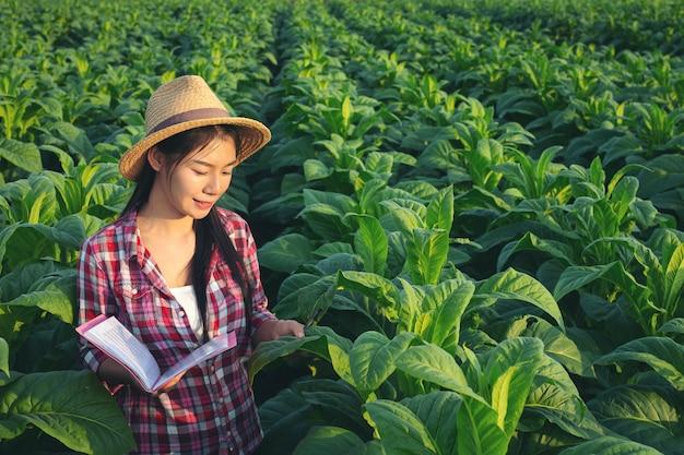 農家はノートブックチェック現代タバコ畑を開催します。 無料写真