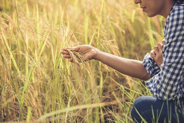 農家は米を持っています。 無料写真