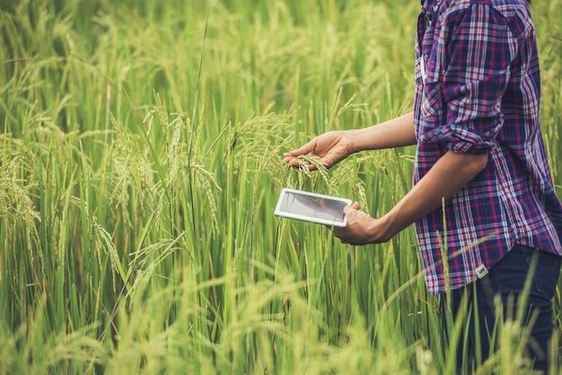 Фермер стоя в рисовом поле с таблеткой. Бесплатные Фотографии