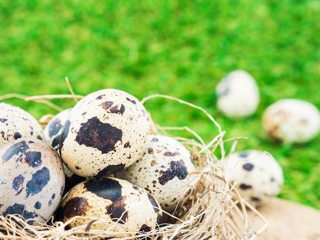 緑の芝生の背景の上に鳥の巣の中の小さな卵 無料写真