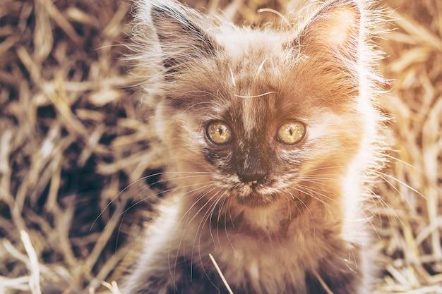 干し草の背景を持ついたずらな茶色の子猫 無料写真