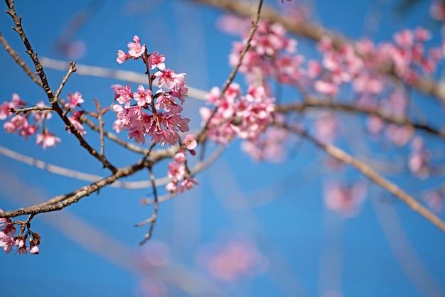 美しいピンクの花の背景 無料写真