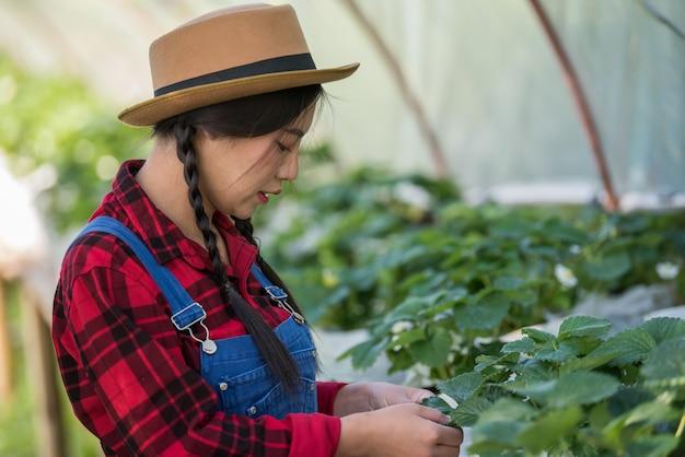 美しい農家の女性がいちご農場をチェック 無料写真