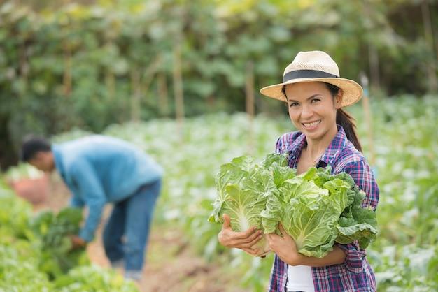 農家は白菜農園で働いています 無料写真