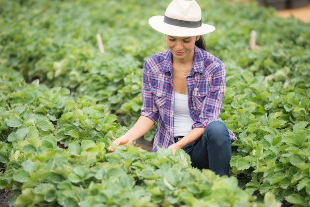 農民はイチゴ農場で働いています。 無料写真