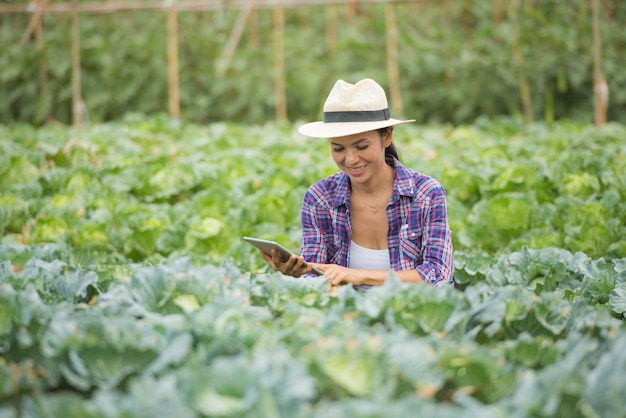 農家は野菜畑で働いています。デジタルタブレットを使用して野菜をチェック 無料写真