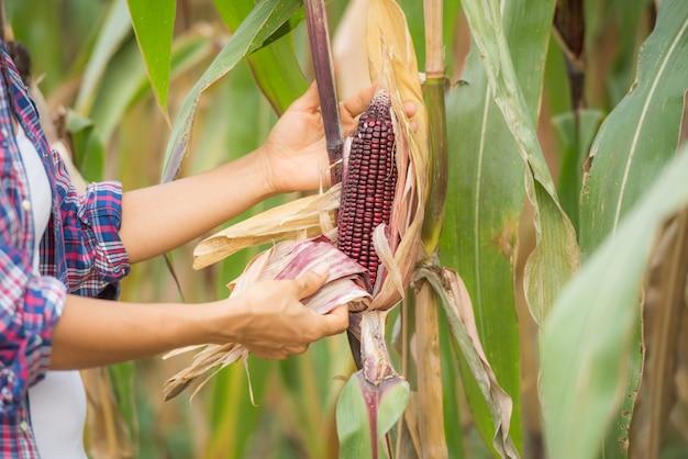 若い女性農家の分野で働いていると植物をチェック 無料写真