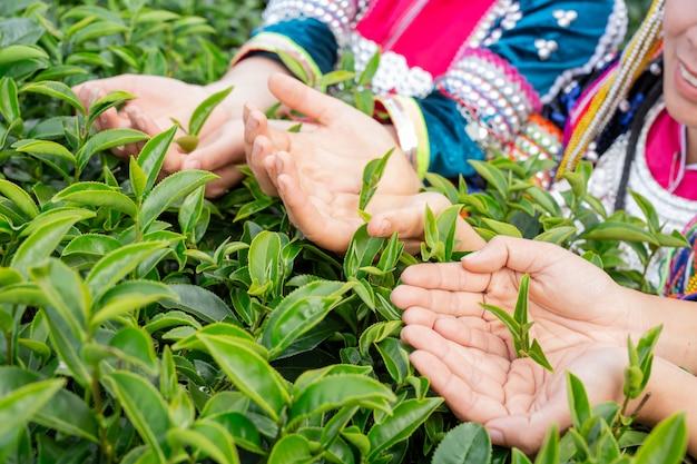 丘陵女性の農業 無料写真