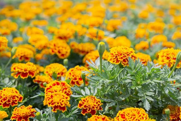 美しいカラフルな花の背景。 無料写真