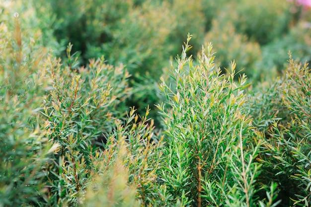 緑の葉の背景。 無料写真