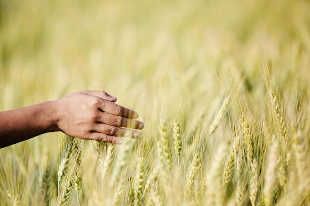 大収穫を楽しんでいる農家の麦畑。 無料写真