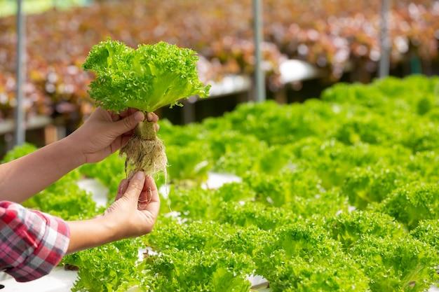 水耕栽培システム、健康のために土壌を使わずに野菜やハーブを植える 無料写真