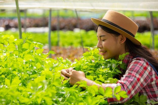 水耕栽培システム、健康のために土壌を使用せずに野菜やハーブを植える、現代の食料と農業 無料写真
