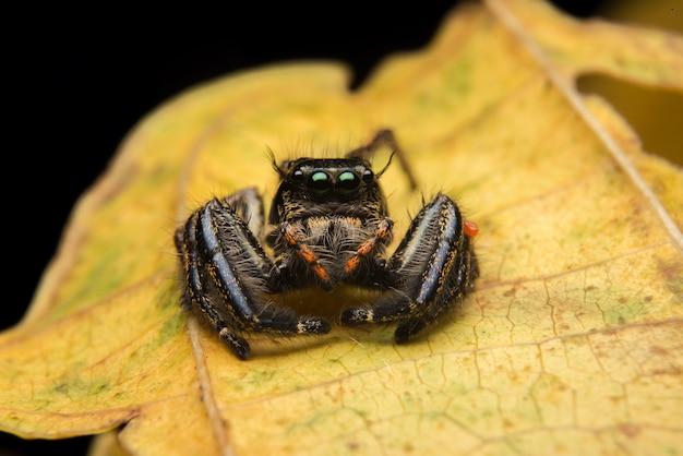 跳躍クモ捕食者自然生息地 無料写真