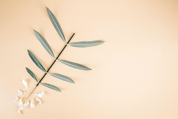 キョウチクトウの葉は白い花びらと明るい黄色の背景に Premium写真