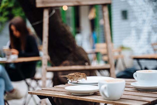 市の鳥。屋外カフェのテーブルに座っているスズメ 無料写真