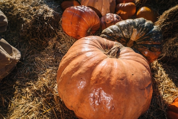 わらの背景に成熟した大きなオレンジ色のカボチャ 無料写真