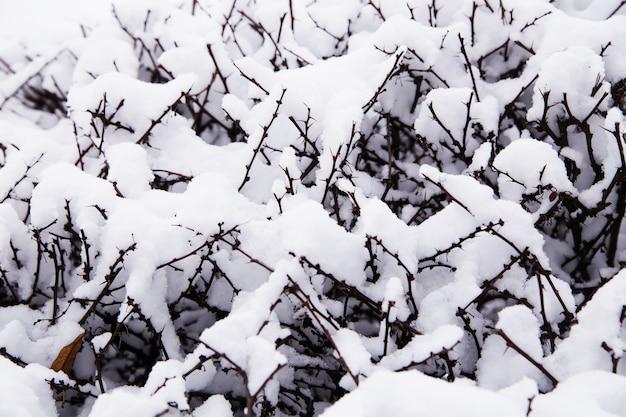 ブッシュの雪の要約。小さな茂みの枝を覆う雪のクローズアップ。 Premium写真