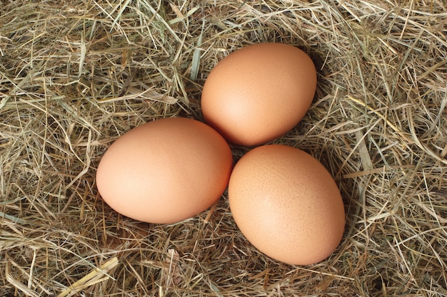 干し草の巣に鶏の卵 Premium写真