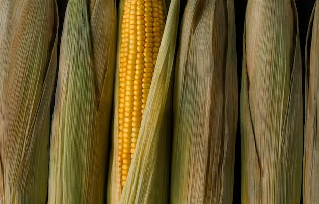 太陽の下で新鮮な黄色のトウモロコシ、新しい野菜の収穫 Premium写真
