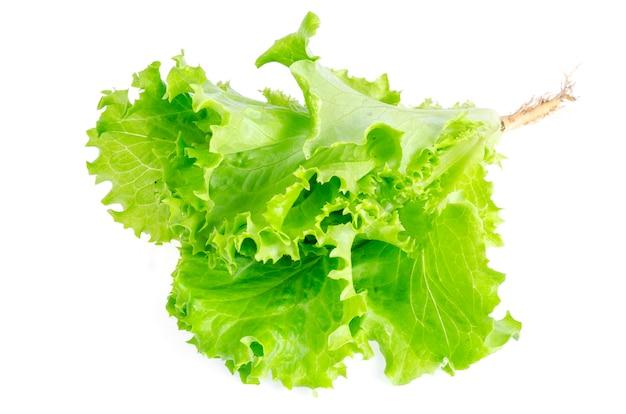 Густолиственный зеленый салат изолированный на белизне. фото Premium Фотографии