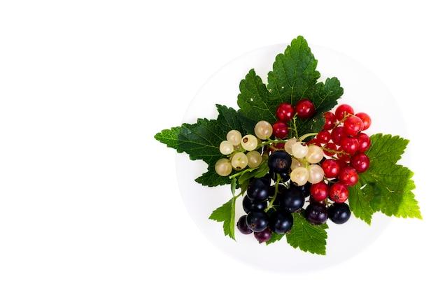 明るい背景に黒、赤、白スグリの果実 Premium写真