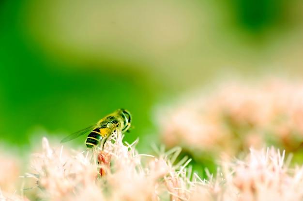 Пчела в размытия фона Бесплатные Фотографии