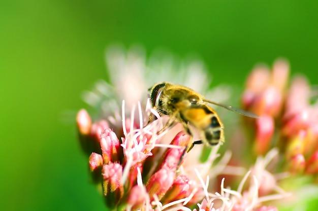 花に蜂 無料写真