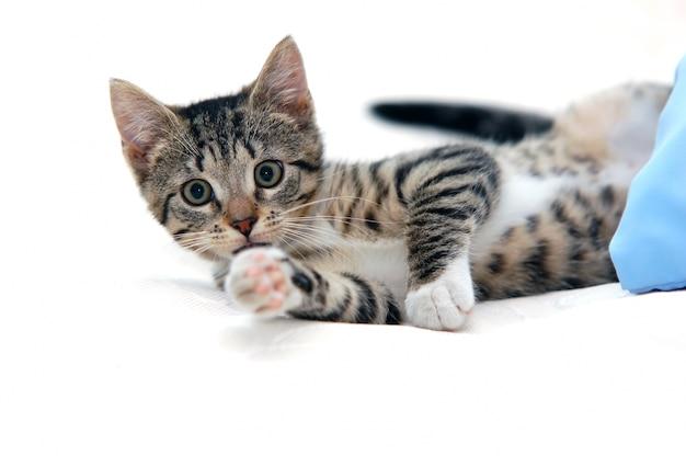 猫横たわっ 無料写真
